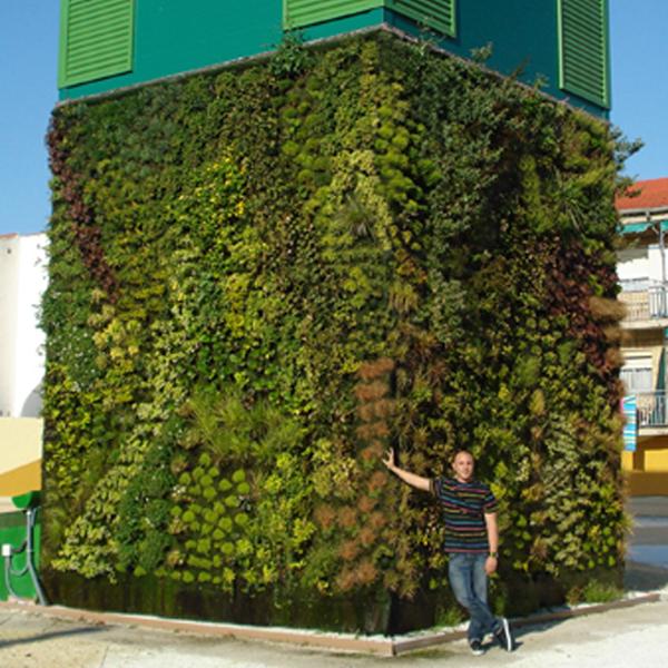 jardinagem vertical como construir jardins verticais